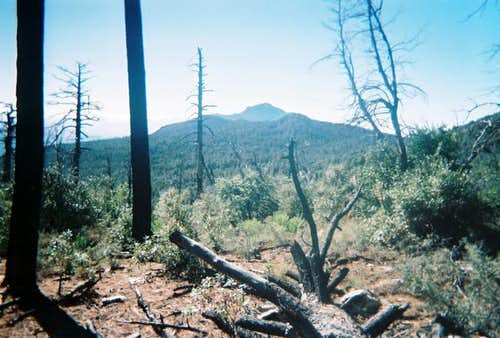 Looking south at Rincon Peak.