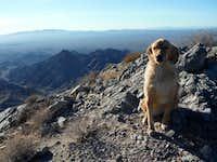 Windblown golden on Chemehuevi summit