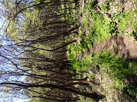 Wellsville Spring Woods