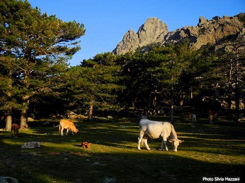 Scenery at foot of Punta di l'Acellu