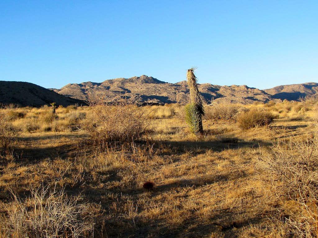On Quail Springs Trail