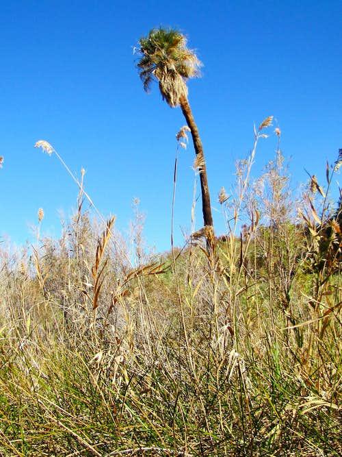 Coachella Valley Preserve, December 2015