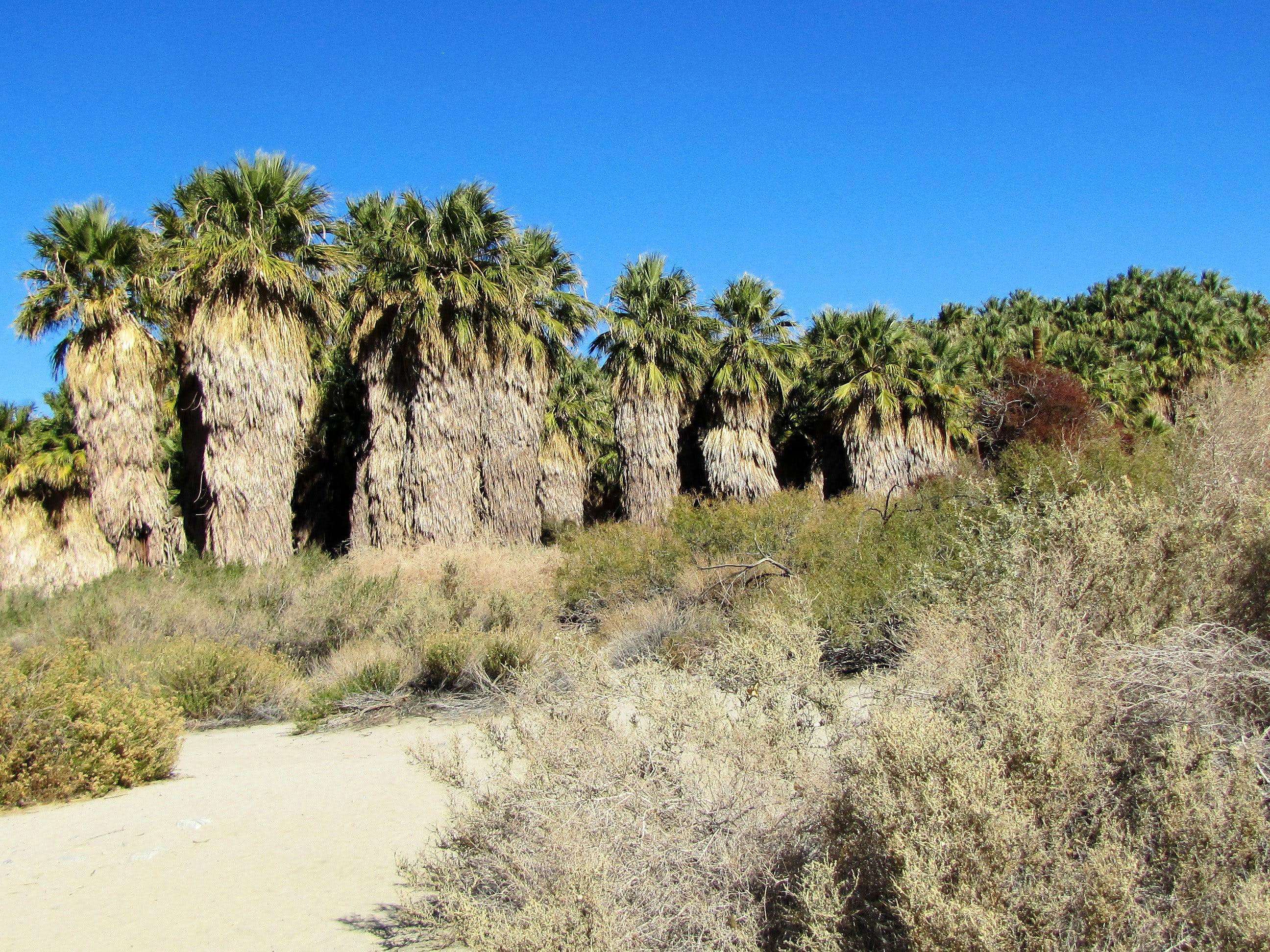 Coachella Valley Preserve, 1000 Palms Oasis