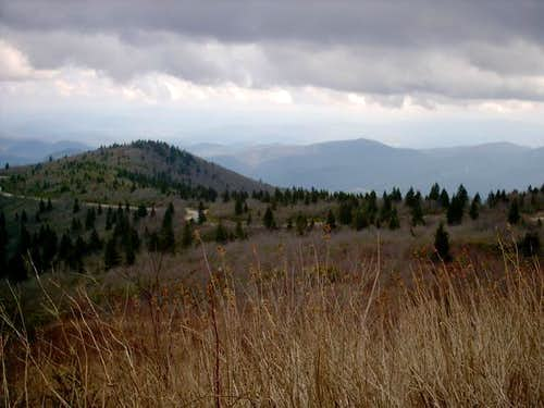 This is the Black Balsam Knob...