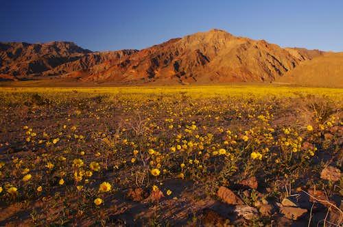 Black Mountains; Part of the Amargosa Range