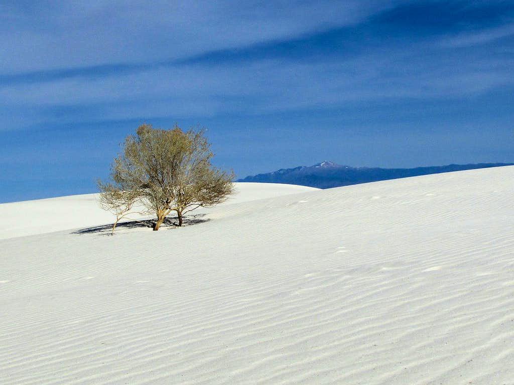 Sierra Blanca Peak & lone bush