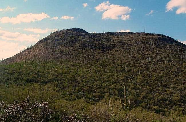 Tumamoc Hill from the...