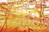Fall and fog