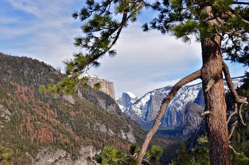 drought stricken trees