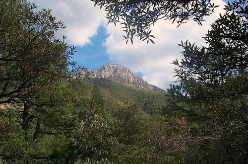 View of Mt. Wrightson from...
