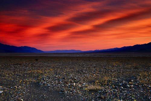 Death Valley Super Bloom Sunset