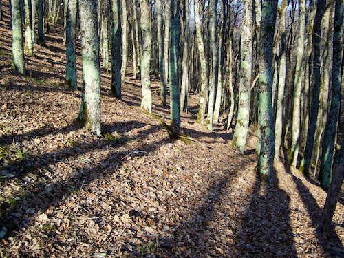 Beautiful forest on Lapjak
