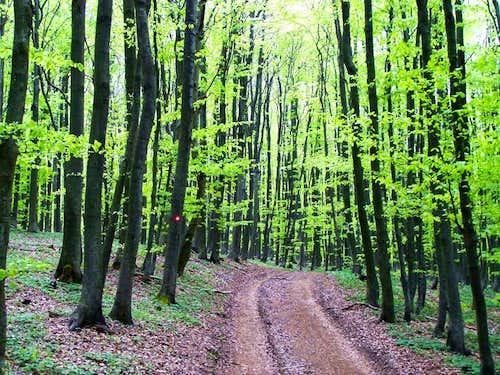 Forest on Češljakovački vis