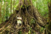 huge tree along trail