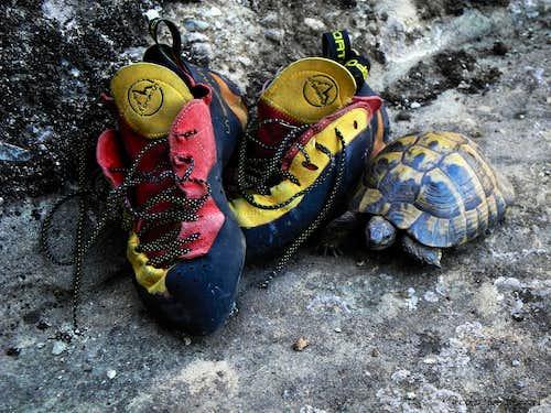 Meteora, a snooper tortoise
