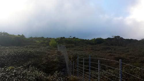 Fence Line Along Bog