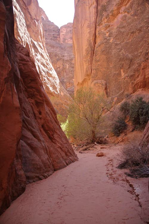 Lost and Found Canyon