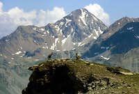 A pair of steinbocks (Capra ibex) <br>near the summit of Monte Erban <i>3004m</i>