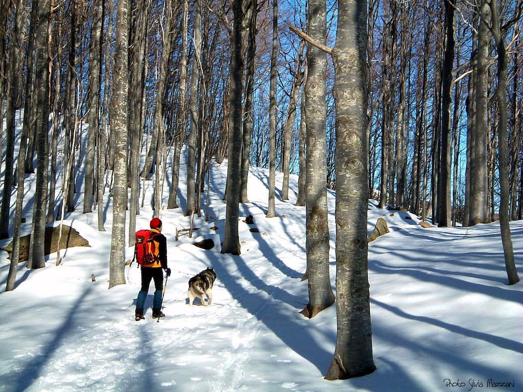 Crossing Pianaccia beech forest