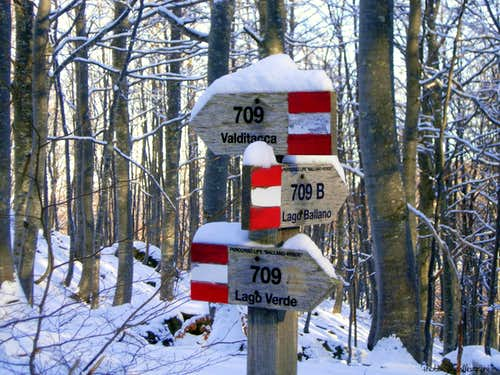 Wooden signpost inside the forest