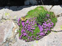 Butterfly and wildflowers seen on the East Face of Teewinot, Teton Range, WY