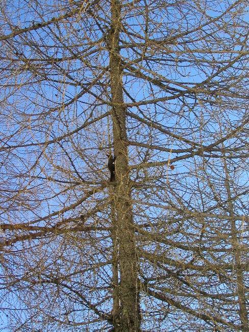 The squirrel on the tree in...