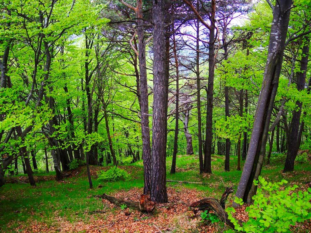 Wood between Cima Nara and Monte Guil