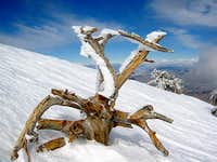 Rime ice near the summit of...