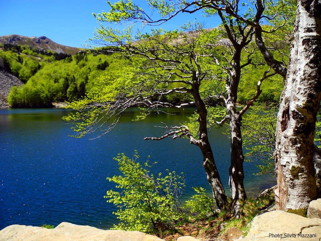 Spring tender colours  on Lago Santo shore