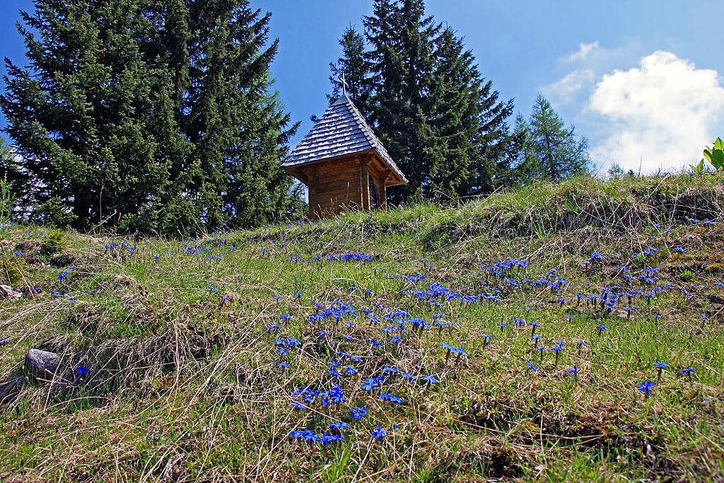 Spring on Hadersdorfer Alm