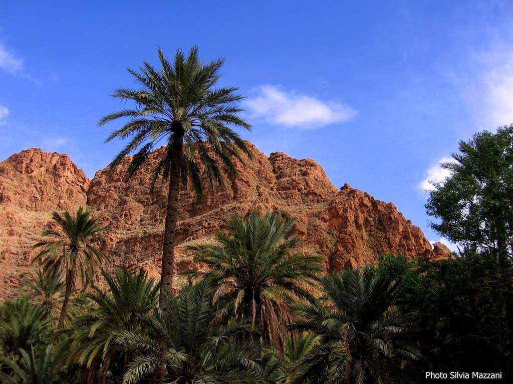Palm grove just before Todra Gorge