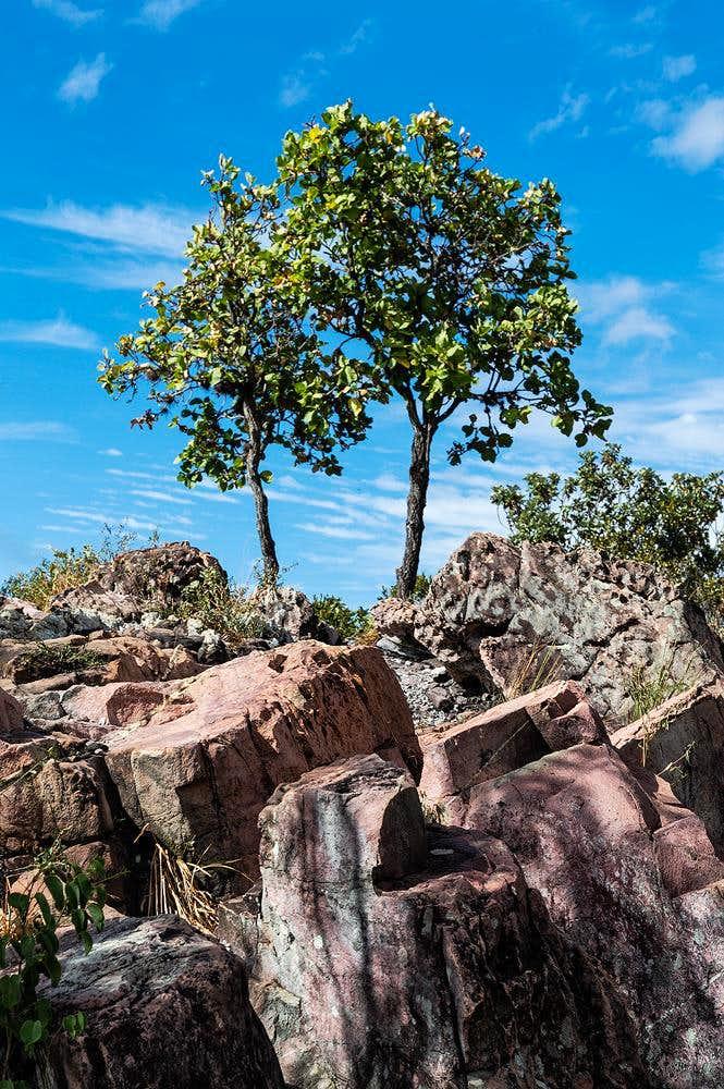 Brazilian cerrado (savannah)
