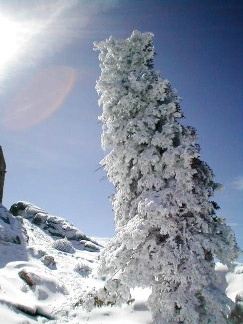 Cool tree on the summit of...