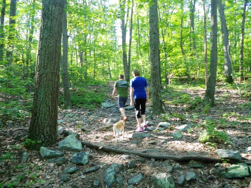 Typical Appalachian Trail Scenery