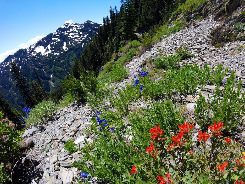 Long Ridge Trail to Ludden-Scott saddle