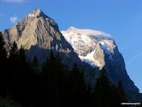Wetterhorn early in the morning