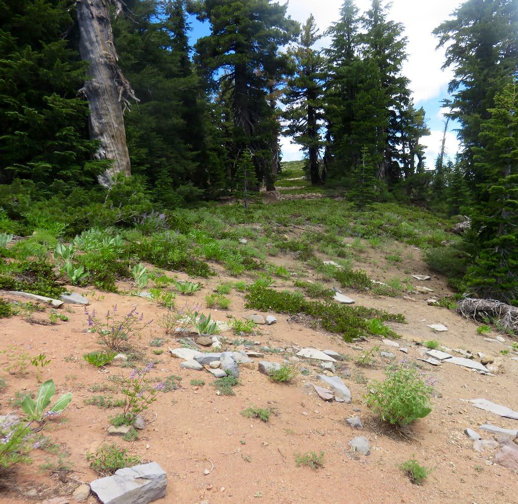 Heading towards the summit of Peak 8652