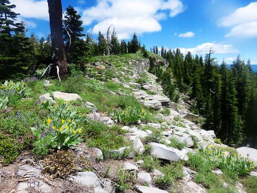 On the Barker Ridge