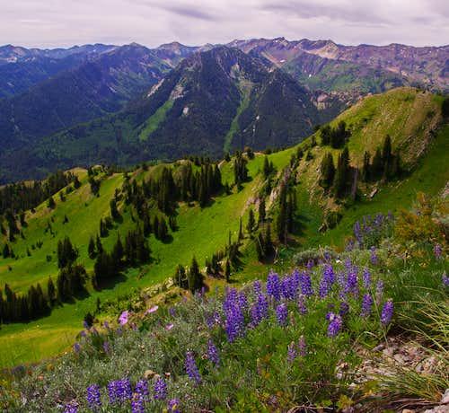 Kessler Peak From Gobblers Knob