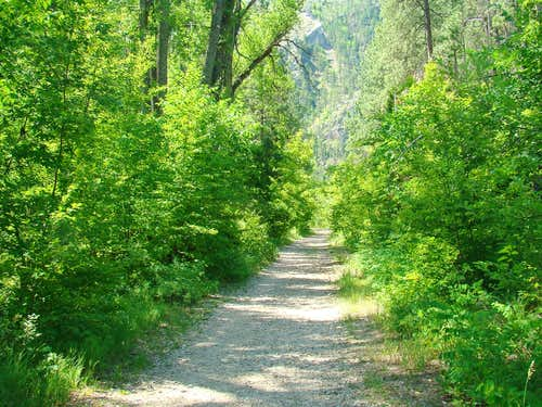 Little Elk Creek Trail View