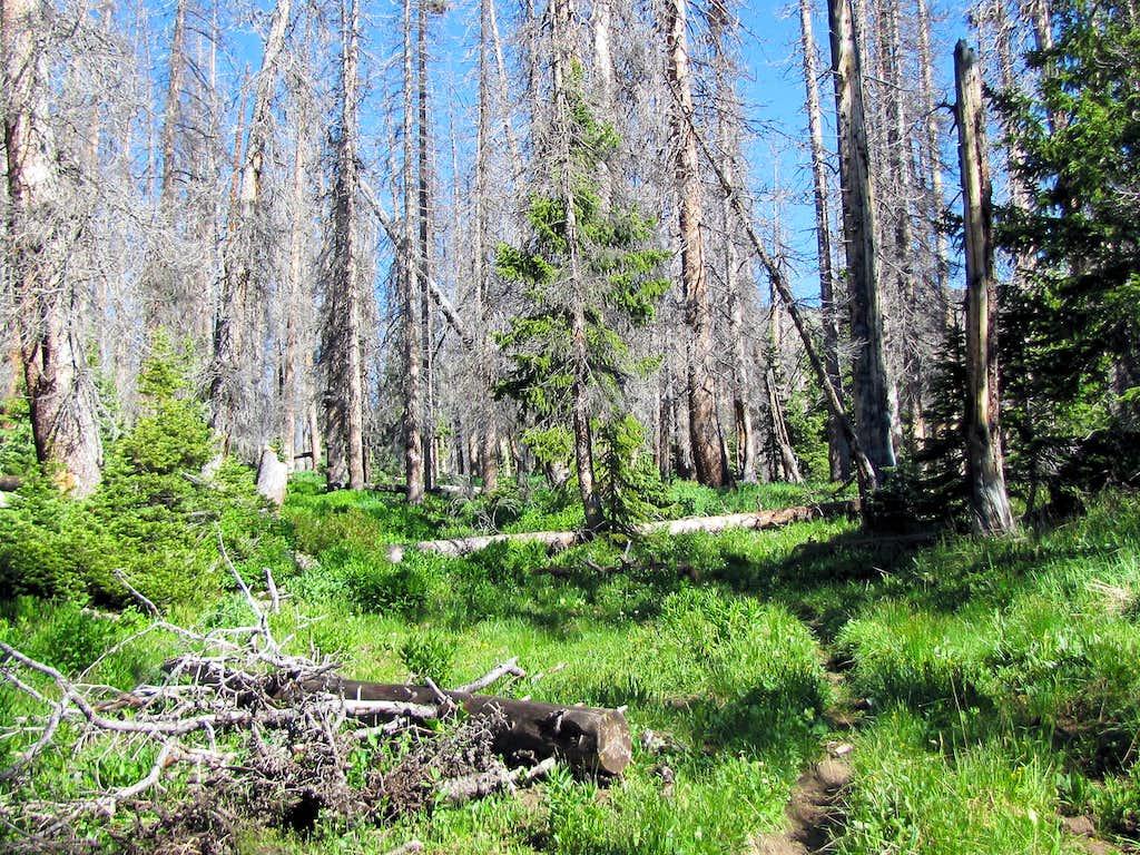 Dead forest below Archuleta Lake