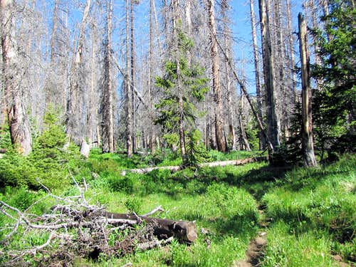 Dead forest below Archuleta Lake