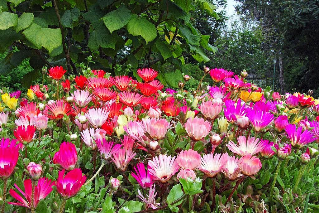Akureyri botanic garden