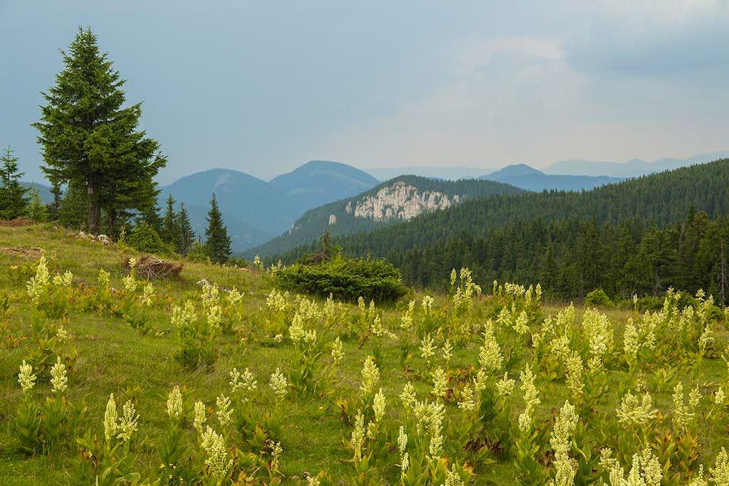 Hasmas mountains