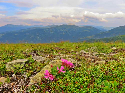 Nockberge and alpine flora