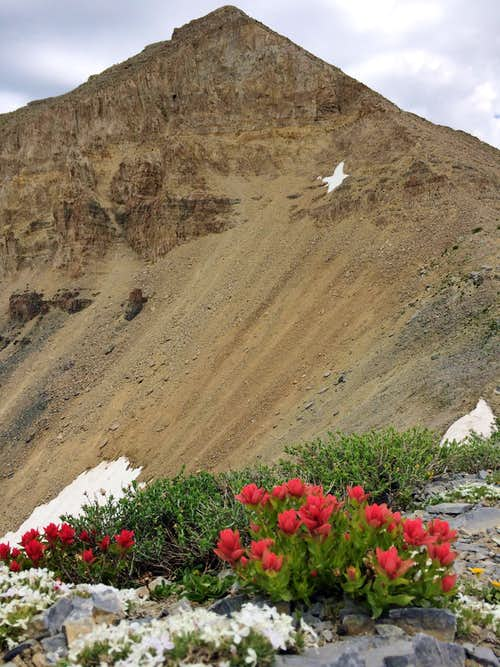 South Timp wildflowers