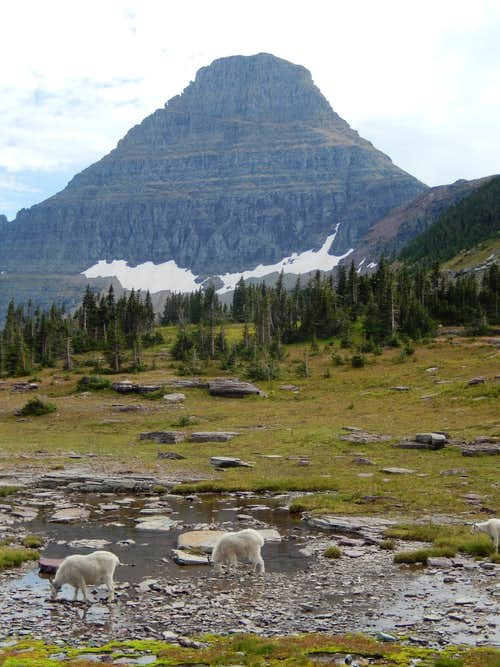 Goats and Reynolds Mtn.