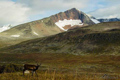 Sarek wilderness