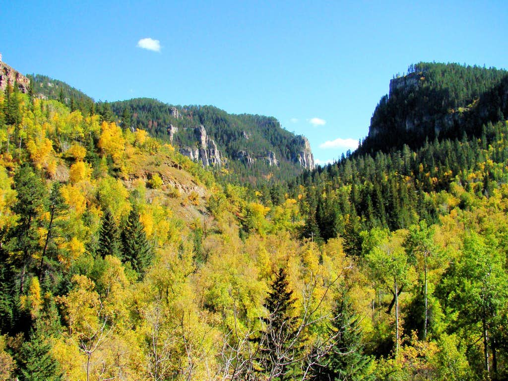 Aspens Brighten Spearfish Canyon