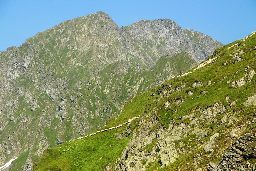 Carpathian summer